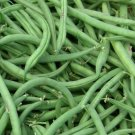 15 Seeds of Burpee Stringless Green Beans, NON-GMO, Variety Sizes Sold