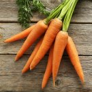 500 Seeds of Little Fingers Carrot Seeds, Baby Carrot, Nantes Type, NON-GMO, FREE SHIP