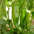 50 Seeds of Anaheim Chile Hot Pepper Seeds, NON-GMO, Variety Sizes, Chili, FREE SHIP