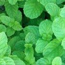 Mint Mix Seeds, Get 4 Packs, Peppermint, Spearmint, Lemon Mint, Lemon Balm