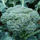 250 Seeds of Waltham 29 Broccoli Seeds, NON-GMO, Easy to Grow, High Yields, FREE SHIP