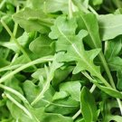 1000 Seeds of Roquette Arugula Seeds, Rocket, Colewort, NON-GMO, Variety Sizes, FREE SHIP