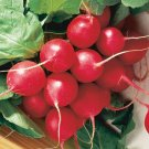 100 Seeds of Cherry Belle Radish Seeds, NON-GMO, Fast Harvest, Variety Sizes, FREE SHIP