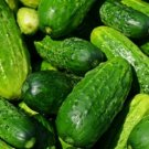 30 Seeds of Cucumber, Spacemaster Cucumber Seeds, Variety Sizes Sold NON-GMO