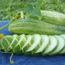 30 Seeds of Straight Eight Cucumber Seeds, NON-GMO, Heirloom, Variety Sizes