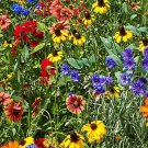 400 Seeds of Southeast Wildflower Seed Mix, 25 Stunning Annuals and Perennials, FREE SHIP