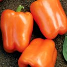 25 Seeds of Orange Sweet Bell Pepper, NON-GMO, Heirloom, Variety Sizes, FREE SHIP