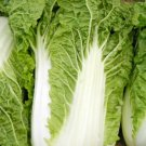 300 Seeds of Michihili, Chinese Cabbage Seeds, NON-GMO, Variety Sizes, FREE SHIP