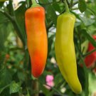 50 Seeds of Hungarian Wax Hot Pepper Seeds, Hot Banana Pepper, NON-GMO Variety Sizes