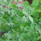 1000 Seeds of Sweet Marjoram Herb Seeds, Knotted Marjoram, Majorana, NON-GMO, FREE SHIP