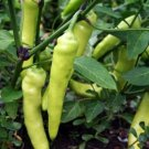 100 Seeds of Sweet Banana Pepper Seeds, NON-GMO, Heirloom, Mild, Variety Sizes, FREE SHIP