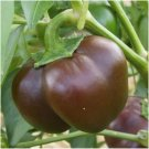 50 Seeds of Chocolate Beauty Bell Pepper, NON-GMO, Heirloom, Variety Sizes