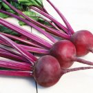 75 Seeds of Early Wonder Beet Seeds, Tall Top, Beetroot, NON-GMO, Variety Sizes