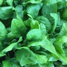 75 Seeds of Viroflay Spinach Seeds, Monstrueux de Viroflay, NON-GMO, Variety Sizes Sold