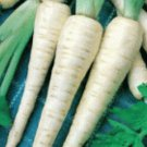 100 of  FRESH PARSNIP HOLLOW CROWN SEEDS