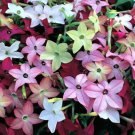 200 + of FLOWERING TOBACCO MIX SEEDS POPPY NICOTIANA alata