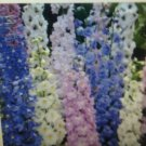 20 of Delphinium Pacific Giant Mixed Flower Seeds