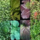 HOT SELLER 200 ASIAN LEAFY MIX SEEDS SPRING MICRO-GREENS SALAD HEIRLOOM NON-GMO TASTY
