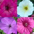 HOT SELLER PETUNIA HYBRIDA MIX 600 SEEDS HANGING BASKETS CONTAINERS FLOWERS
