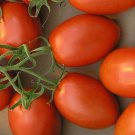 UNA SELLER ROMA TOMATO 100 SEEDS HEIRLOOM NON-GMO CANNING SAUCES OPEN-POLLINATED