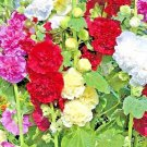 UNA SELLER DWARF HOLLYHOCK QUEENY MIX 60 SEEDS FLOWERS BORDERS NON-GMO OPEN-POLLINATED