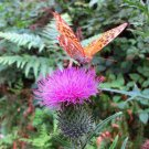 UNA SELLER BUTTERFLY MIX WILDFLOWERS Pollinators Hummingbirds Native Bees Colorful Monarchs