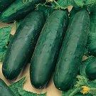 UNA SELLER Marketmore 76 Cucumber *Heirloom* (50 Seed's)