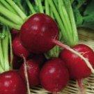 UNA SELLER Crimson Giant Radish *Heirloom* (300 Seed's)