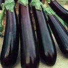 UNA SELLER Long Purple Eggplant *Heirloom* (100 Seed's)