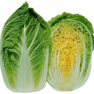 UNA SELLER Michihili Chinese Cabbage *Heirloom* (500 Seed's)