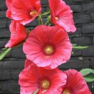 25 of Pink Hollyhock Seeds Perennial Giant Flower Seed Flower Flowers