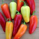 UNA 50 of Santa Fe Pepper Seeds, Heirloom Mild Pepper Seeds, Mild Peppers, Non-Gmo