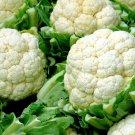 UNA 100 of Cauliflower Seeds, Self Blanching, Heirloom Cauliflower Seeds, Non-Gmo