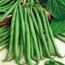 UNA 75 of Bean Seeds, Topcrop, Heirloom Bean, Non-Gmo Bush Green Bean, Heavy Producer