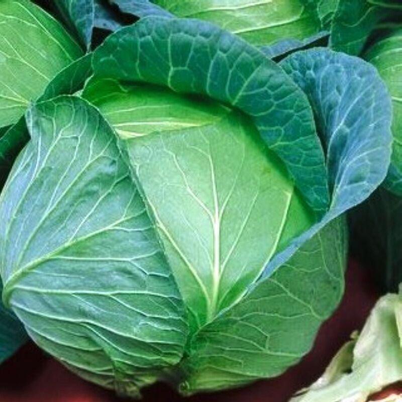 UNA 5000+ of 1 oz Cabbage Seeds, Danish Ballhead, Bulk Seed, Heirloom Cabbage Seeds