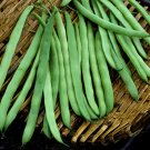 UNA 75 of Bean Seeds, Kentucky Pole Beans, Heirloom Pole Bean, Green Beans, Non-Gmo