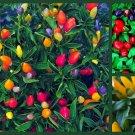 UNA Ornamental Pepper Seed, Heirloom Hot Pepper, Non-Gmo Pepper Seeds, 3 Pk Special