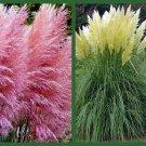 UNA Pampas Grass Seeds, Pink & White, 2pk Special, Heirloom Ornamental Grass Seeds