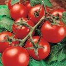 UNA 1/4 oz Tomato Seed, Moneymaker, Non-Gmo Heirloom Tomato 2500 Seed, Huge Crops