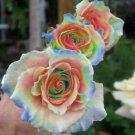 Rainbow Rose 10 Seeds - Flower Bush Perennial Flowers Seed Bloom