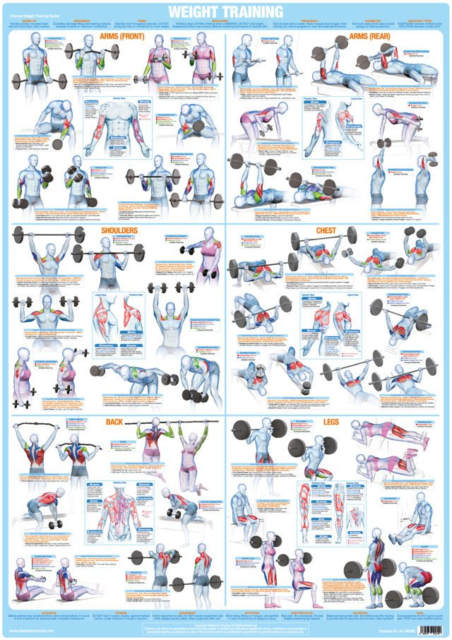 Bodybuilding and Weight Training Chart - A1 Size Paper Format