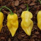 KoloKolo Store Lemon Habanero Pepper Seeds Yellow Habanero Caribbean Hot Pepper 50 Seeds