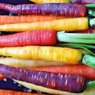 KoloKolo Store Rainbow Carrot Blend Mix Seeds Colorful NON-GMO 300 Seeds