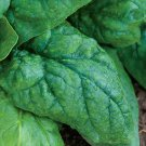 KoloKolo Store Giant Noble Spinach Seeds NON-GMO 75 Seeds