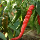 KoloKolo Store Cayenne Long Red Thin Pepper Seeds NON-GMO 50 Seeds