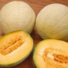 KoloKolo Store Honey Rock Melon Seeds Cantaloupe Sugar Rock NON-GMO 25 Seeds