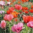 1001 seeds ORIENTAL POPPY MIX Flower Seeds Summer Blooms Perennial Garden/Containers
