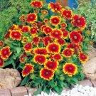 201 seeds BLANKET FLOWER Seeds American Native Wildflower Perennial Butterflies Garden