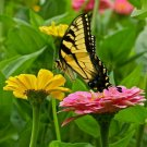 $8.00-QUICK & EASY BUTTERFLY GARDEN KIT Fast Growing Seeds Blooms Spring to Fall