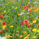 2000 seeds DEER RESISTANT WILDFLOWER MIX 15 Different Flower Seeds Butterflies Bees